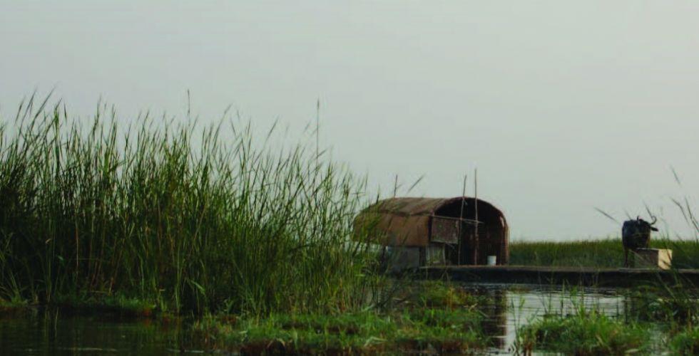 الأهوار.. تستعيد ألقها بعد الوفرة المائية وغزارة الأمطار