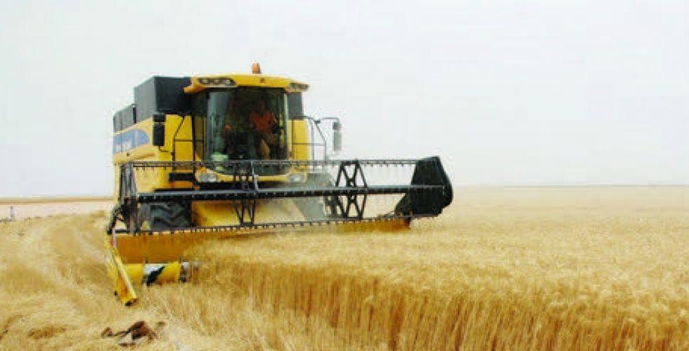 تسويق 386 ألف طن من الحنطة في ميسان والنجف وذي قار