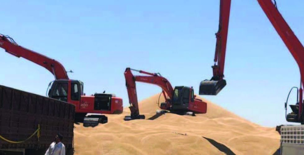 فلاحو واسط يسوقون نصف مليون  طن من الحنطة