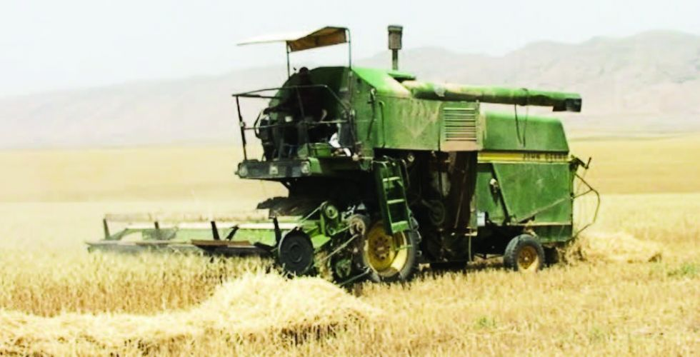 واسط تتصدر المحافظات بانتاج الحنطة خلال الموسم الحالي