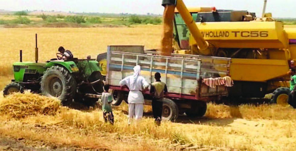 إحصائية: تضرر 4 آلاف دونم من حقول الحنطة في كركوك