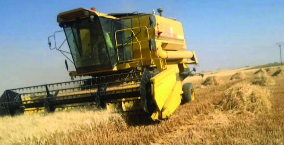 الزراعة: العراق لن يستورد الطحين مستقبلاً