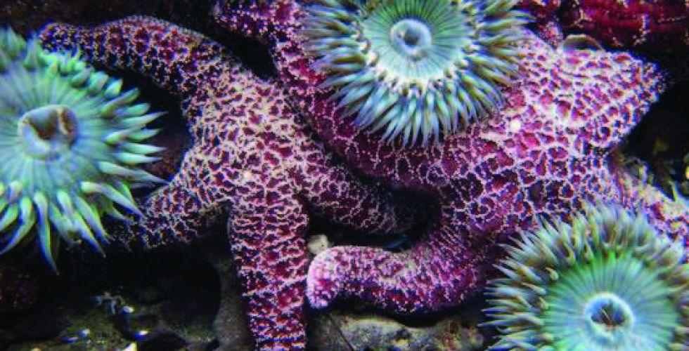 لماذا البحث عن أدويةٍ في أعماق البحار؟