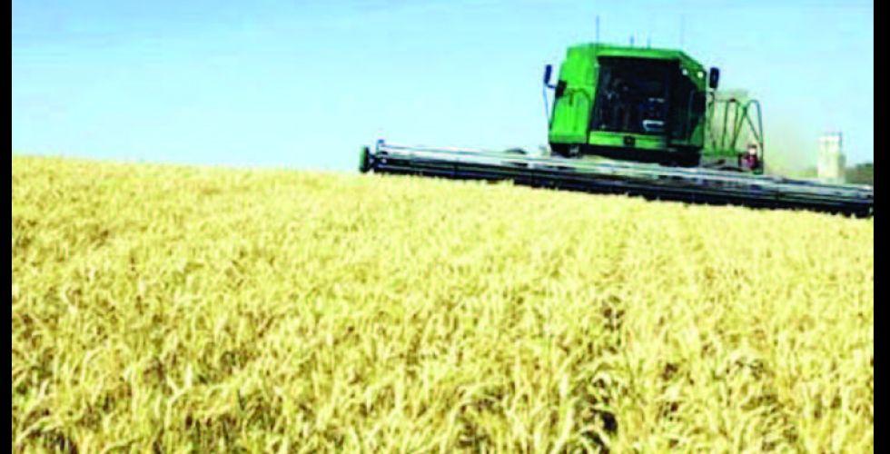 واسط تخطط لزراعة مساحات قياسية بالحنطة والشعير