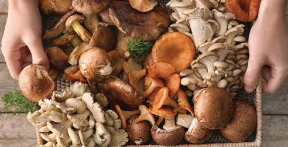 الفطر يكافح سرطان البروستاتا والشلل الرعاش والزهايمر