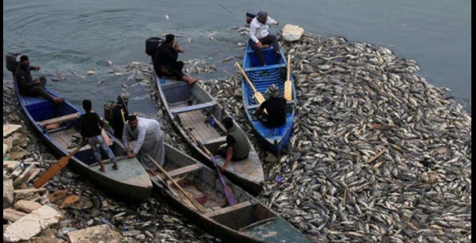 إجراءات عاجلة للسيطرة على نفوق الأسماك بالمحافظات
