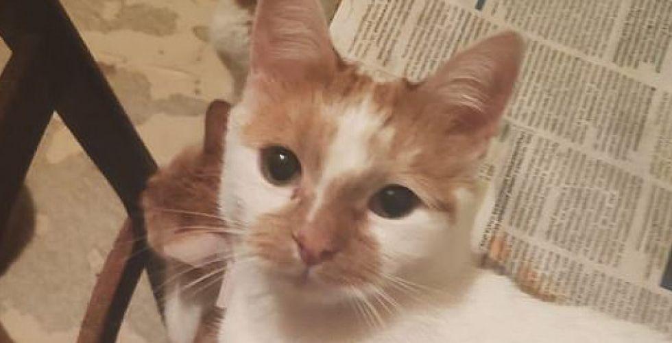 روسية تجمع 130 قطة في شقتها