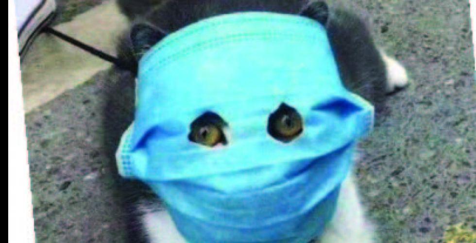 {القطط المقنّعة} تظهر في الصين
