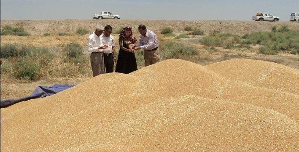 تهيئة 10 مراكز لتسويق الحنطة والشعير في واسط