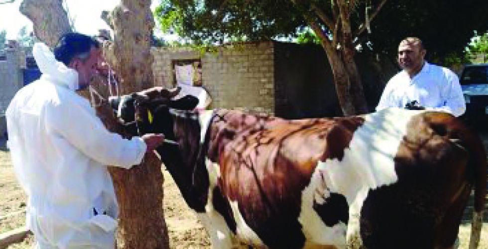 مراقبة الأمراض الوبائية للحيوانات  في 3 محافظات