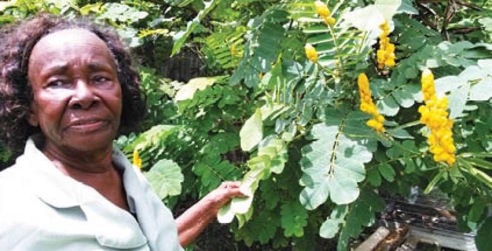 نبات الشيح.. علاج محتمل لفيروس  (كوفيد – 19)