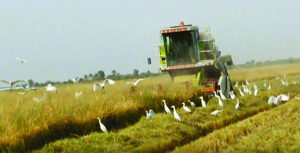 الزراعة: وفرنا ملايين الدولارات بعد تحقيق الاكتفاء الذاتي بعدة محاصيل