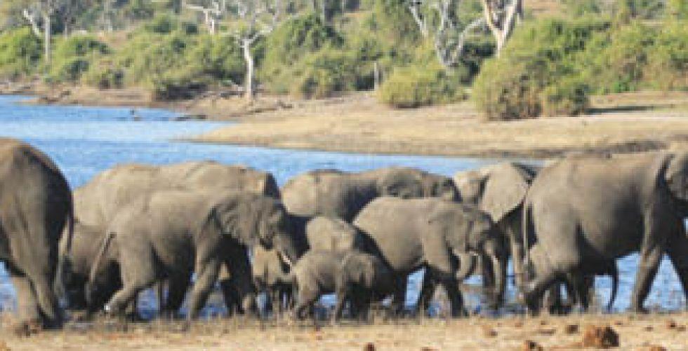 تكنولوجيا الأقمار الاصطناعيَّة للحفاظ على الفيلة