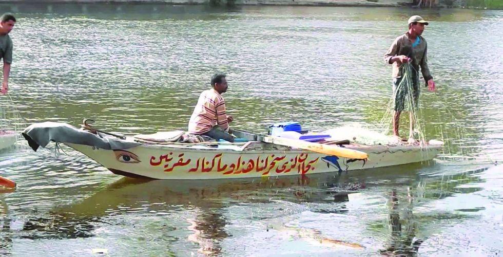 السمك البحري.. خيار عراقي في مصر