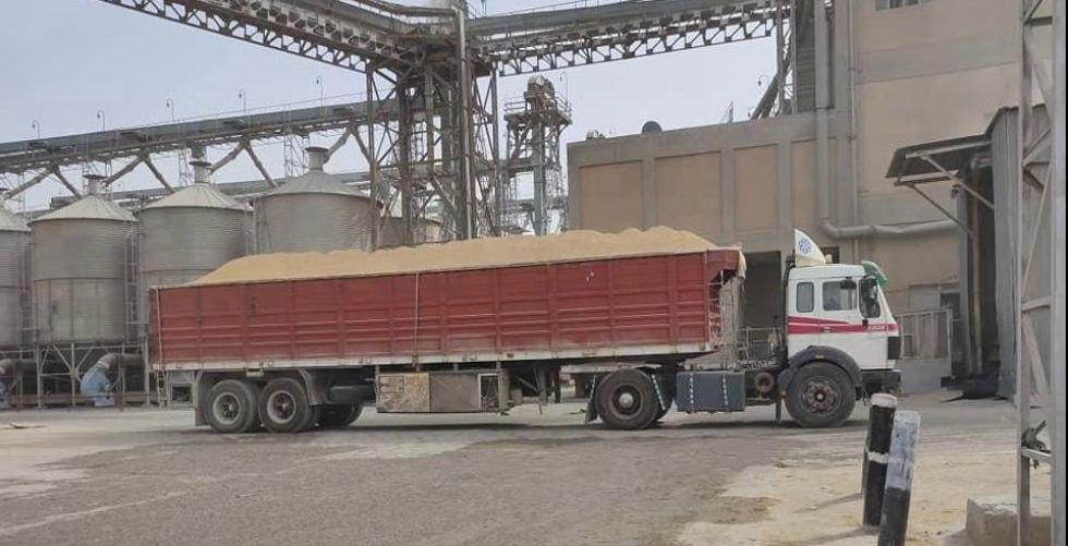 التجارة: تحقيق الاكتفاء الذاتي  من الحنطة