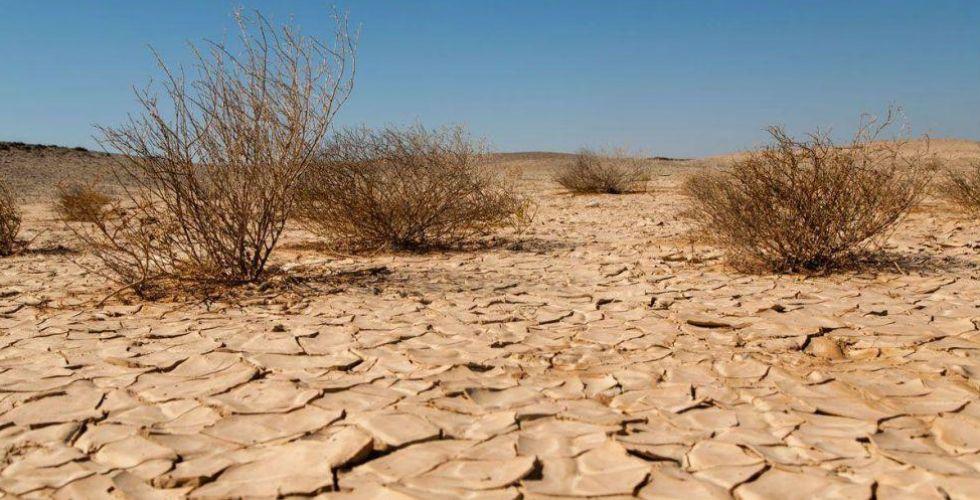 وزارة الزراعة: تراجع دائم للمساحات الخضراء  ونصف البلاد متصحر
