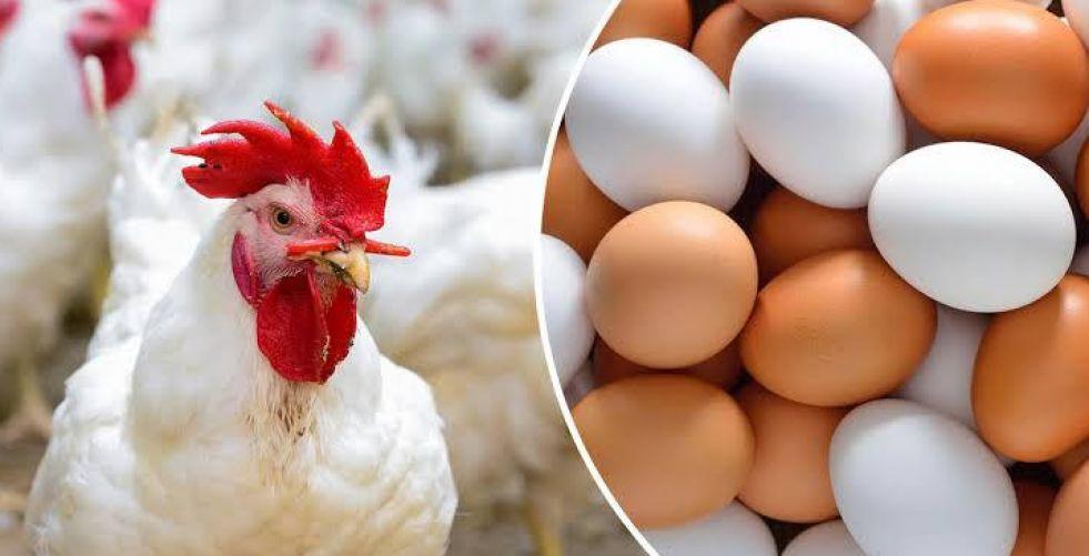 أسعار البيض والدجاج تواصل {التحليق} من دون رقيب