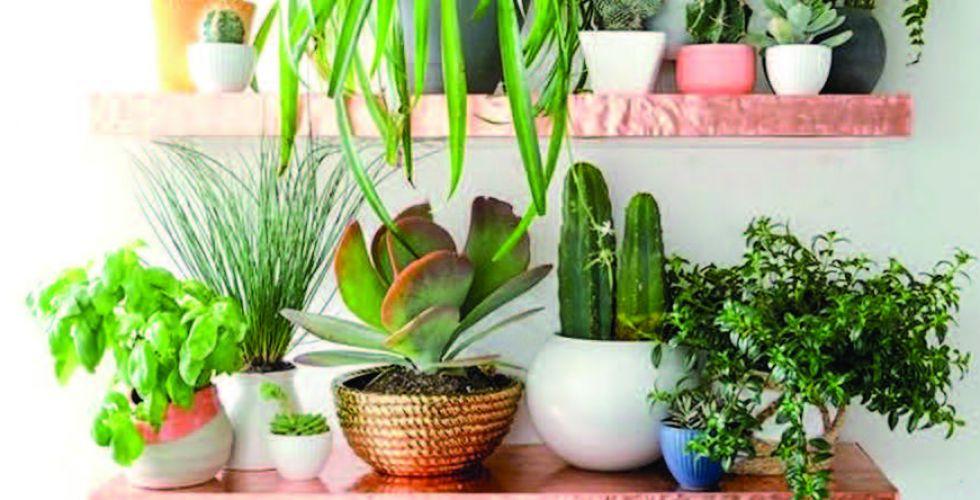 خلال فصل الصيف الحار.. أفضل الأوقات لسقي النباتات المنزليَّة