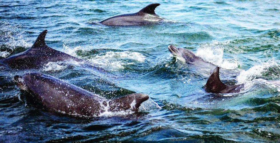 الجائحة تعيد الدلافين إلى مياه لشبونة