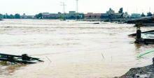بسبب السيول.. الخنافس السوداء تجتاحُ المدن