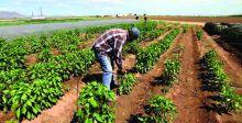 تداعيات سلبية على الزراعة الأميركية بسبب التوترات التجارية