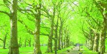 التشجيرُ والغطاءُ النباتيّ بمقدورهِما إعادة توازن الكرةِ الأرضيّة