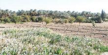 مواطن يطالب باستعادة أراضيه المستلبة من قبل النظام المباد