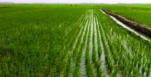 وزير التجارة: نعتزم جعل الديوانية عاصمة العراق الزراعية