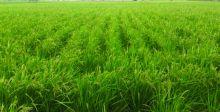 الزراعة: إدراج أكثر من 15 مليون دونم ضمن الموسم الشتوي المقبل