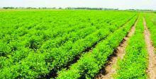 428 ألف دونم مساحة الخطة الزراعية الشتوية في بابل