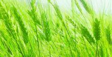 الزراعة تنهي تحضيراتها لخطة الموسم الشتوي المقبل