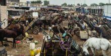 عربات السنغال تواجه الزوال