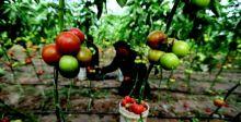 100 ألف فرصة عمل يوفرها تعديل القانون الخاص بالمتفرغين الزراعيين