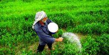 زراعة 460 ألف دونم بمحاصيل  شتوية في بابل