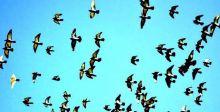 الطيور.. رموز القوة والحرية