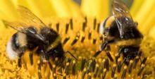 علماء يفكّون شيفرة رقصة النحل