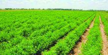 الزراعة: حظر 25 منتجاً مستورداً