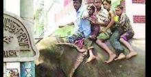بنغلادش تفرض حظراً على ركوب الفيلة