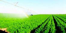 خبراء: الإنقاذ الاقتصادي يبدأ بالزراعة