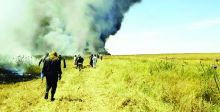 الحرائق تأتي على مئات الدونمات الزراعية  في المحافظات