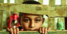عراقيان يحصدان جائزتي {أكسبوغر} العالميَّة للتصوير