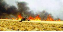 الزراعة: الحرائق أثرت في 4 بالمئة من مساحة محصولي الحنطة والشعير