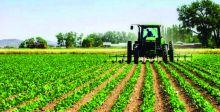 لجنة نيابية توصي بوضع {خطط طارئة} للنهوض بالزراعة