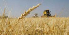 ايقاف ادخال الحنطة المهربة الى السوق  يحمي الاقتصاد