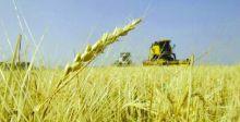 كربلاء تباشر توزيع مستحقات مسوقي محصول الحنطة