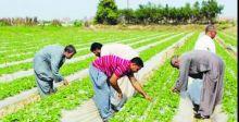 محمد الخفاجي يؤكد ضرورة دعم القطاع الزراعي في المحافظات كافة