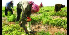 الحماية الجزائيَّة للثروة الزراعيَّة
