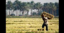 الزراعة لـ {الصباح»: حققنا الاكتفاء الذاتي لـ 28 محصولاً
