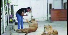 أبو الطيب: ترويض الحيوانات المفترسة هواية وتجارة
