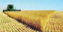 وزير الزراعة لـ {الصباح}: تخصيص 483 مليار دينار كمستحقات للفلاحين